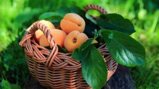 абрикосы в плетеной корзине с зелеными листьями