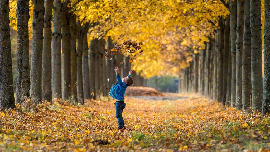 Straubing, 2015. október 24. 2015. október 24-én közreadott képen egy kisfiú játszik a falevelekkel egy õszi színekben pompázó parkban a dél-németországi Straubingban október 23-án. (MTI/EPA/Armin Weigel)