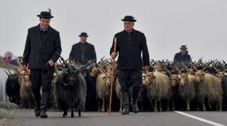 Hortobágy, 2017. október 21. Rackanyáj a hortobágyi Kilenclyukú híd lábánál megtartott Szent Dömötör-napi behajtási ünnepen 2017. október 21-én. A hidegebb idõ közeledtével, a hagyományt követve, a Hortobágyon a pásztorok a rájuk bízott jószágokat behajtják a pusztai legelõkrõl téli szálláshelyükre. MTI Fotó: Czeglédi Zsolt