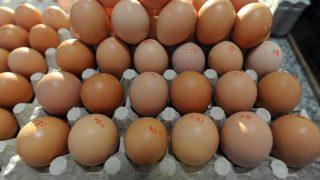 Debrecen, 2017. január 7. Tojáskínálat. Változatlan, a 2016. év végi áron kínálják a tojást a debreceni piacon. MTVA/Bizományosi: Oláh Tibor  *************************** Kedves Felhasználó! Ez a fotó nem a Duna Médiaszolgáltató Zrt./MTI által készített és kiadott fényképfelvétel, így harmadik személy által támasztott bárminemû – különösen szerzõi jogi, szomszédos jogi és személyiségi jogi – igényért a fotó készítõje közvetlenül maga áll helyt, az MTVA felelõssége e körben kizárt.