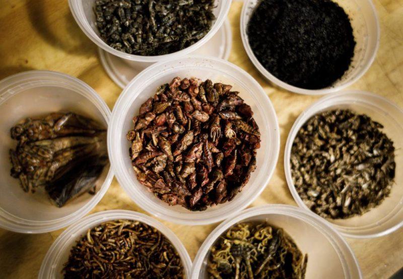 New York, 2017. november 15. Egy tízfogásos vacsora hozzávalóiként elõkészített sült rovarok Joseph Yoon dél-koreai-amerikai szakács Brooklyn Kitchen nevû New York-i éttermében 2017. november 13-án. Az elõkelõ étteremben Yoon látványos ételekkel kedveskedik vendégeinek, akik kedvükre válogathatnak skorpió és különféle rovarok, mint például lódarazsak, lisztbogár lárvák, tücskök és szöcskék felhasználásával készült fogások közt. A kulináris élményt kínáló séf a rendhagyó alapanyag-választást a személyes alkotói szenvedélyen túl az emberi rovarfogyasztás hosszú távú ökológiai elõnyeivel indokolja. (MTI/EPA/Justin Lane)