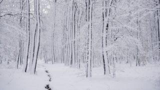 Orfû, 2017. december 16. Havas fák a Mecsekben Orfû közelében 2017. december 16-án. MTI Fotó: Sóki Tamás