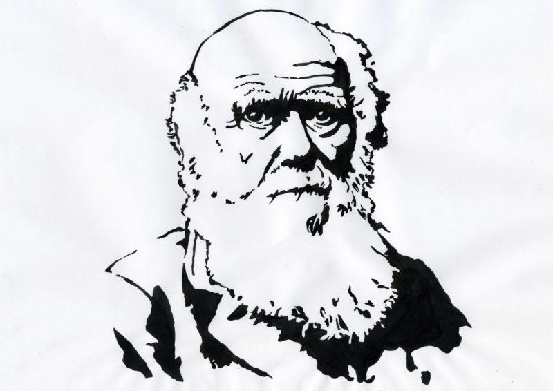 Portrait of Charles Darwin - Portrait du naturaliste anglais Charles Darwin (1809-1882) Illustration ©Alessandro Lonati/Leemage