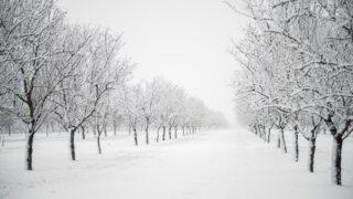 Pécsudvard, 2018. február 3. Behavazott ültetvény Pécsudvard közelében 2018. február 3-án. A havazás veszélye miatt a fél országra elsõ fokú figyelmeztetést adott ki az Országos Meteorológiai Szolgálat. MTI Fotó: Sóki Tamás