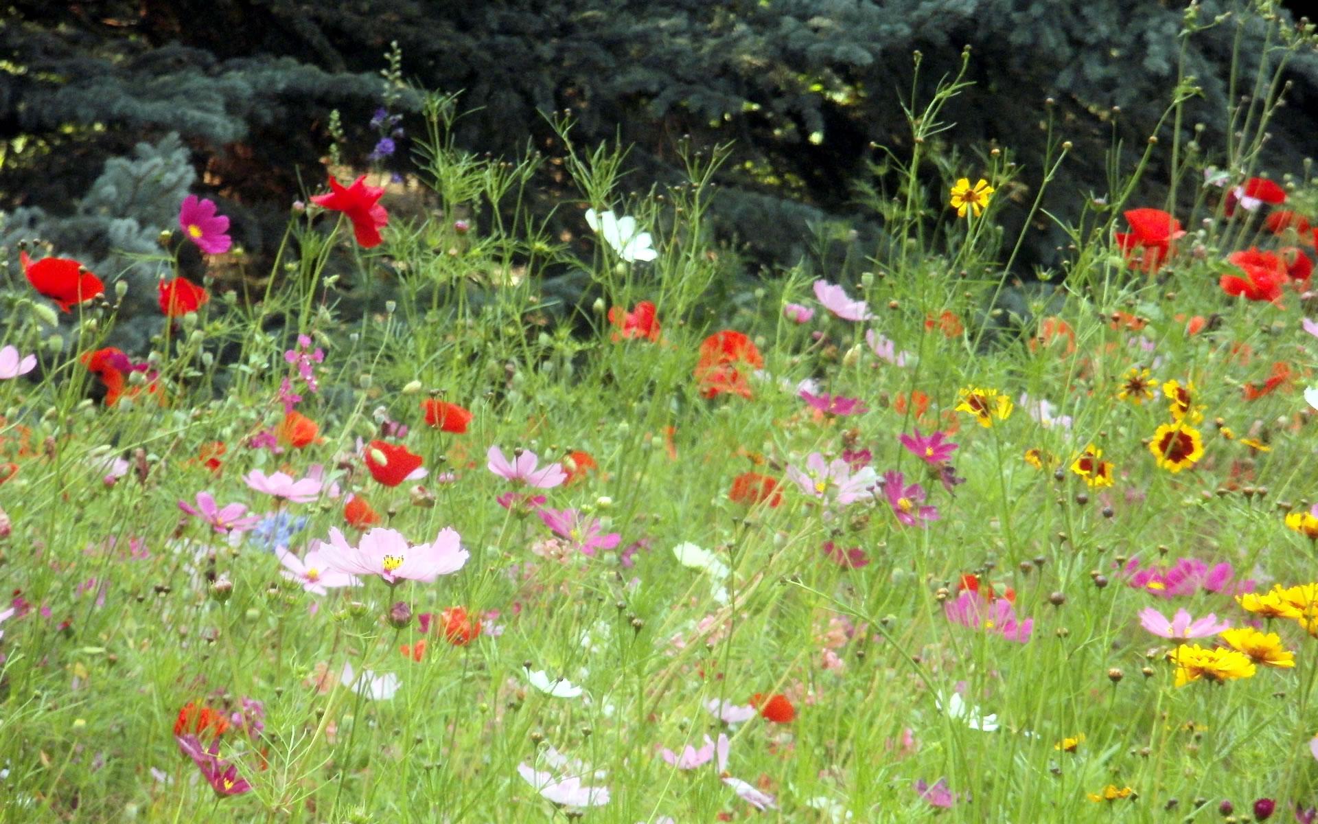 jerryswildflower.jpg