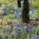 wildflower-garden-25.jpg