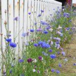 wildflower-garden-6.jpg