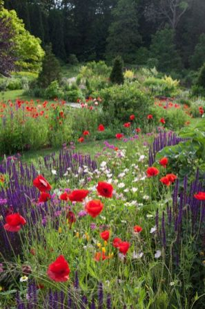 wildflower-garden-7.jpg