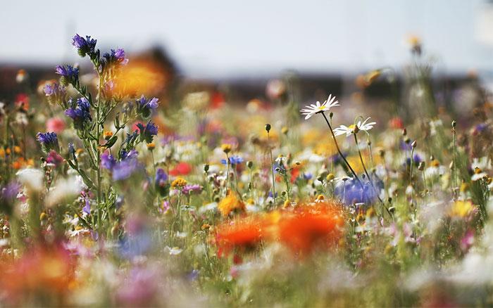 wildflower-meadow.jpg