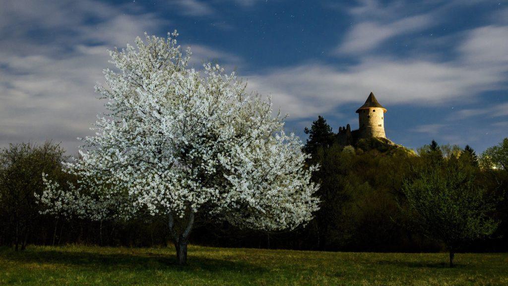 Salgótarján, 2017. április 6.  Virágzó cseresznyefa Salgótarján Somoskõ településrészén, jobbra a somoskõi vár 2017. április 5-én éjjel. MTI Fotó: Komka Péter
