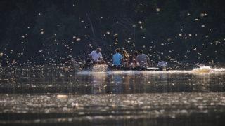 Tiszafüred, 2012. június 20. Frissen kikelt tiszavirágok (Polingenia longicauda) között halad a vízen egy motorcsónak a Tisza tiszaörvényi szakaszán. A csak a Tiszán és mellékfolyóin élõ - a vízminõségére igen érzékeny - kérészek tömeges rajzása többnapnyi meleg idõ után június 16-án kezdõdött el a folyó legalsó szakaszán. MTI Fotó: Czeglédi Zsolt