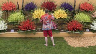 London, 2018. május 21. Kardvirágokat (Gladiolus) fényképet egy látogató a londoni Chelsea Virágkiállításon 2018. május 21-én, a sajtónapon. Az egyik legjelentõsebb európai kertészeti seregszemlét május 22. és 26. között tekinthetik meg az érdeklõdõk a brit Királyi Kertészeti Társaság rendezésében. (MTI/EPA/Facundo Arrizabalaga)