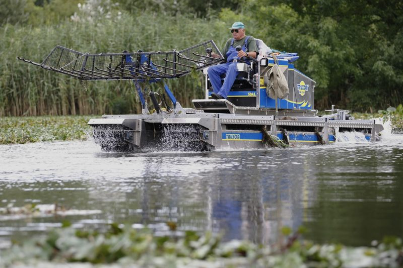 Tiszafüred, 2014. augusztus 14.Kétéltû, hínárkaszáló munkagéppel gyérítik a sulymot a Tisza-tavon 2014. augusztus 14-én. A tározó halászati hasznosítását végzõ cég 38 millió forintért vásárolta a berendezést, amellyel elkezdték a védett, ám a tavon elburjánzott sulyom gyérítését.MTI Fotó: Bugány János