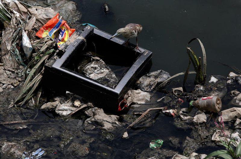 Bengaluru, 2018. június 4. Élelmet keresõ vadmadár háztartási hulladékkal szennyezett vízparton a dél-indiai Bengaluruban (korábban Bangalor) 2018. június 4-én, a környezetvédelmi világnap elõtti napon. A világnap kiemelt témája 2018-ban a mûanyaghulladék-gazdálkodás. (MTI/EPA/Dzsagadis Nv)