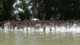 Dunabogdány, 2016. július 10. Több mint háromszáz fürdõzõ szalad egyszerre a víz felé a Nagy Ugrás elnevezésû program alkalmából a dunabogdányi szabadstrandon 2016. július 10-én. Országszerte 15 helyszínen rendezték meg ezen a napon a Nagy Ugrás elnevezésû programot, amellyel a folyók és vizes élõhelyek természeti értékeire hívja fel a figyelmet a Természetvédelmi Világalap (WWF) magyarországi szervezete. MTI Fotó: Bruzák Noémi