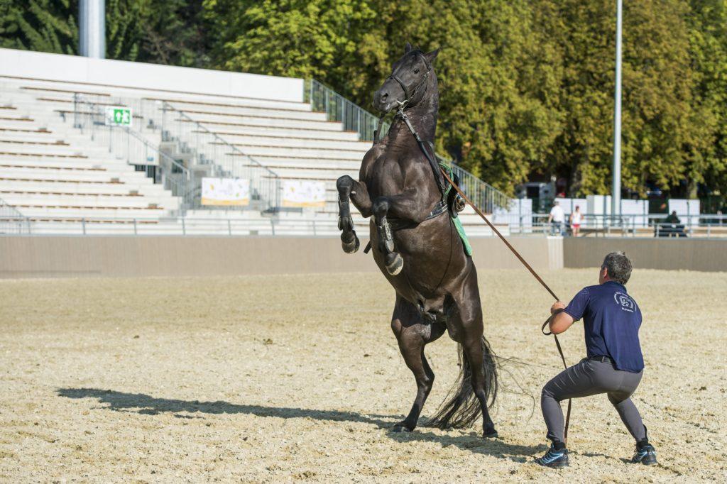 Szilvásvárad, 2018. augusztus 17. Lovat idomít egy férfi az új lipicai lovasközpontban Szilvásváradon a megnyitó elõtti napon, 2018. augusztus 17-én. MTI Fotó: Komka Péter