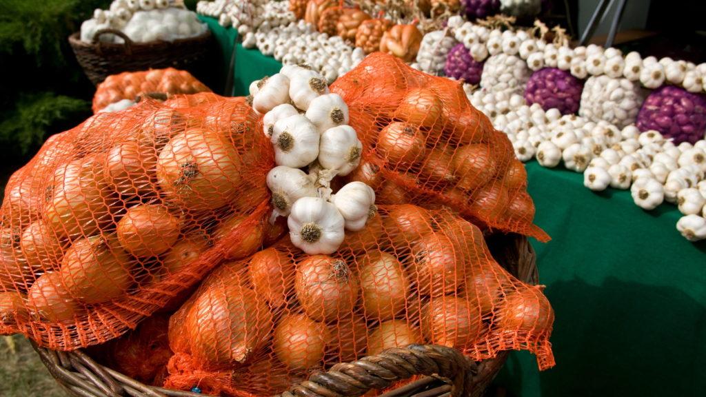 Makó, 2009. szeptember 11. A híres makói hagyma. Immár 19. alkalommal rendeznek ünnepet Makó nevezetességének, a hagymának. Az idén is szakmai nappal indult a rendezvénysorozat. MTI Fotó: Rosta Tibor