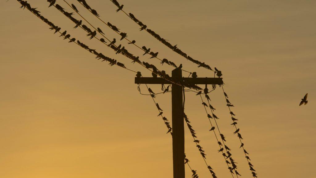 Hortobágy, 2015. augusztus 30. Fecskék gyülekeznek villanyvezetékeken a Hortobágyon, a Kungyörgy-telep közelében 2015. augusztus 30-án. MTI Fotó: Czeglédi Zsolt