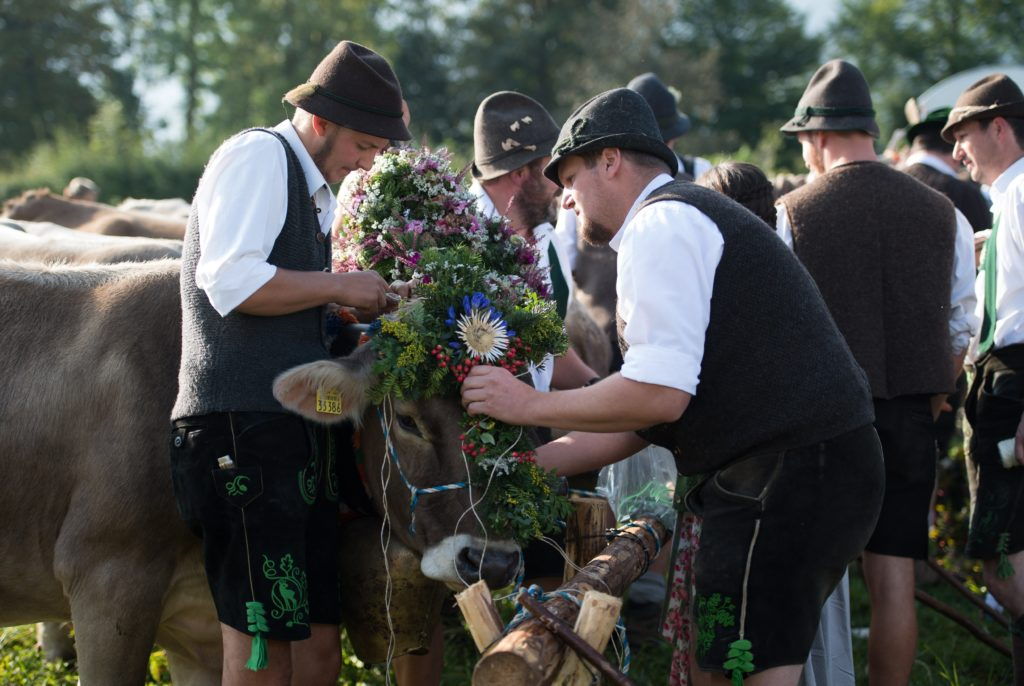 Pfronten, 2018. szeptember 8. Bajor népviseletbe öltözött marhapásztorok feldíszítenek egy tehenet, amint behajtanak egy marhacsordát a nyári alpesi legelõkrõl a téli szállásukra a térségben nyárutón szokásos hagyományõrzõ ünnepségen, a dél-németországi Pfronten település közelében 2018. szeptember 8-án. (MTI/EPA/Daniel Kopatsch)