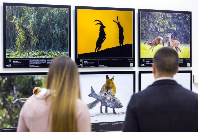 Budapest, 2018. november 6. A Lenergy - Az év természetfotósa 2018 pályázat anyagából rendezett kiállítás a Magyar Természettudományi Múzeumban 2018. november 6-án, a megnyitó napján. MTI/Mohai Balázs