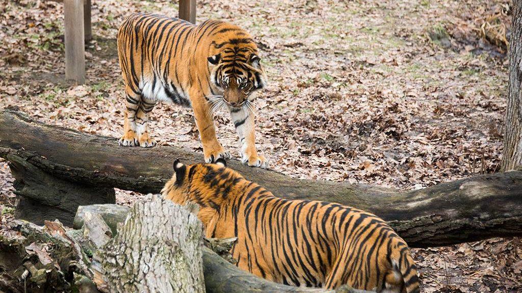 milyen fajok közötti randevú macska tulajdonos társkereső oldal