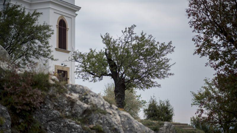 Pécs, 2018. október 19. Az év fájának választott mandulafa a pécsi Havihegyen 2018. október 18-án. MTI/Sóki Tamás