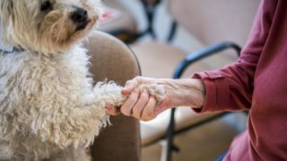 Pécs, 2019. március 6. A Nudli nevû vizsgázott terápiás kutya mancsát fogja a pécsi Szent Lõrinc Gondozóotthon egyik lakója a Misina Természet- és Állatvédõ egyesület terápiás foglalkozásán 2019. március 6-án. Az állatasszisztált terápia célja, hogy fejlessze, szinten tartsa a résztvevõk kommunikációs és koncentrációs képességét, javítsa közérzetüket és kizökkentse õket a hétköznapi rutinból. MTI/Sóki Tamás
