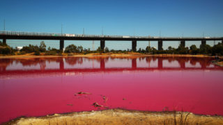 MELBOURNE, AUSTRALIA - MARCH 27: A general view of the pink lake at Westgate Park on March 27, 2019 in Melbourne, Australia.  The inland lake turns pink in warmer months thanks to a natural phenomenon. The pink hue happens in response to high salt levels, lots of sunlight and a lack of rainfall. Lake algae, which grows in the salt crust at the bottom of the lake produces a red pigment as part of its photosynthesis process. (Photo by Scott Barbour/Getty Images)