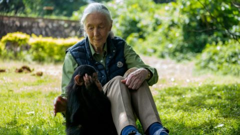 """British primatologist Jane Goodall visits a chimpanzee rescue center on June 9, 2018 in Entebbe, Uganda. - During her visit at the Uganda Wildlife Education Centre, Goodall, also fronted a """"naming ceremony"""" for a baby chimp called Zakayo the second. (Photo by SUMY SADURNI / AFP)"""