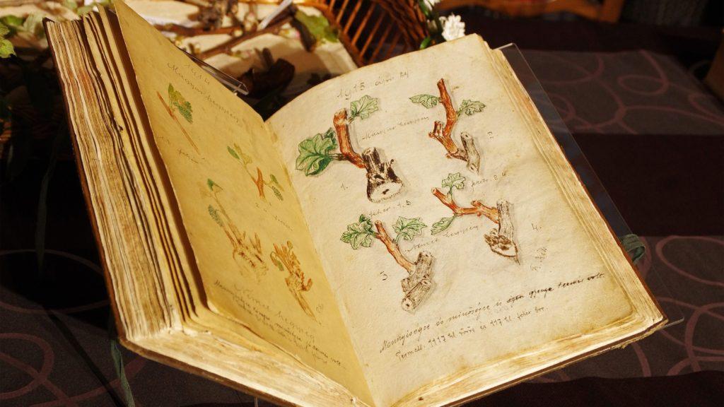 Kõszeg, 2015. április 24. A korábban betelt, 1740-tõl vezetett Szõlõ Jövésnek Könyve a Jurisics-vár lovagtermében tartott ünnepségen Kõszegen 2015. április 24-én. Az elsõ, már betelt könyvet ma a kõszegi városi múzeumban õrzik. MTI Fotó: Büki László