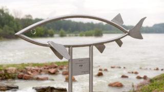 Ásványráró, 2019. május 28. A Szigetközben 1958 májusában kifogott 230 centiméter hosszú, 102 kilogramm tömegû viza sziluettjét mintázó szobor a Duna partján, az ásványrárói hallépcsõnél az átadás napján, 2019. május 28-án. MTI/Krizsán Csaba
