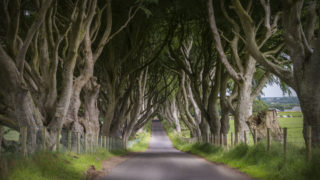 Co. Antrim, Ireland - June 28, 2014: The world famous Dark Hedges in Ballymoney where the trees grow over the road to form an eery tunnel.