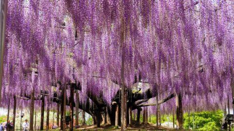 5 különleges fa a nagyvilágból: a nagy túlélőtől a rabtartóig