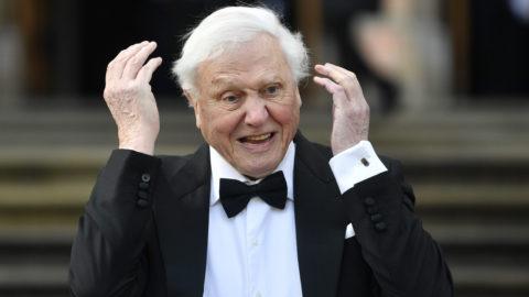 London, 2019. április 4. Sir David Attenborough brit természettudós és ismeretterjesztõ dokumentumfilmes az Our Planet (A mi bolygónk) címû új televíziós dokumentumfilm-sorozat világbemutatóján a londoni Természettörténeti Múzeumnál 2019. április 4-én. Attenborough a sorozat narrátora. MTI/EPA/Neil Hall