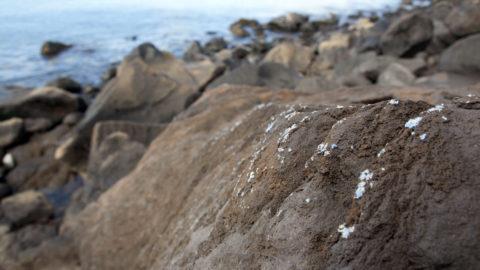 Madeira-sziget, 2019. június 25. A portugál Tenger- és Környezettudományi Központ, a MARE által közreadott, 2019. június 21-én készített képen mûanyag szennyezõdés látható a tengerparti sziklák felületén, Madeira szigetén. A tudósok szerint ez egy új, olvadt mûanyagnak látszó szennyezõdés, amelybõl több foltot is észleltek a nyugat-afrikai partok elõtti atlanti-óceáni portugál sziget parti szikláin. MTI/AP/MARE/Ignacio Gestoso Garcia