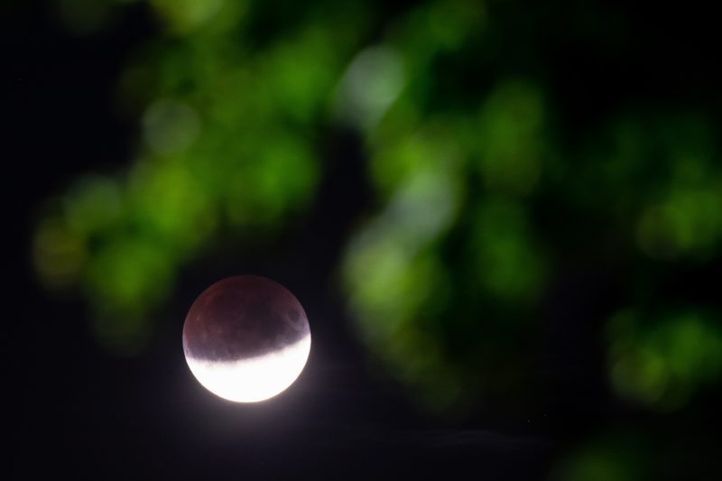 16 July 2019, Recklinghausen: The moon is visible during a partial lunar eclipse behind a branch with leaves. Photo: Marcel Kusch/dpa