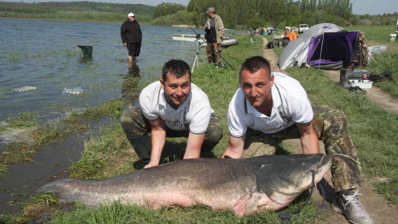 Fehérvárcsurgó, 2010. április 29. Széphegyi László (b) és Sörös János, a kezében tart egy 71,28 kg súlyú lesõharcsát, amelyet a fehérvárcsurgói tározótóban fogtak 2010. április 28-án kezdõdött 72 órás horgászversenyen. MTI Fotó: Borbély Béla