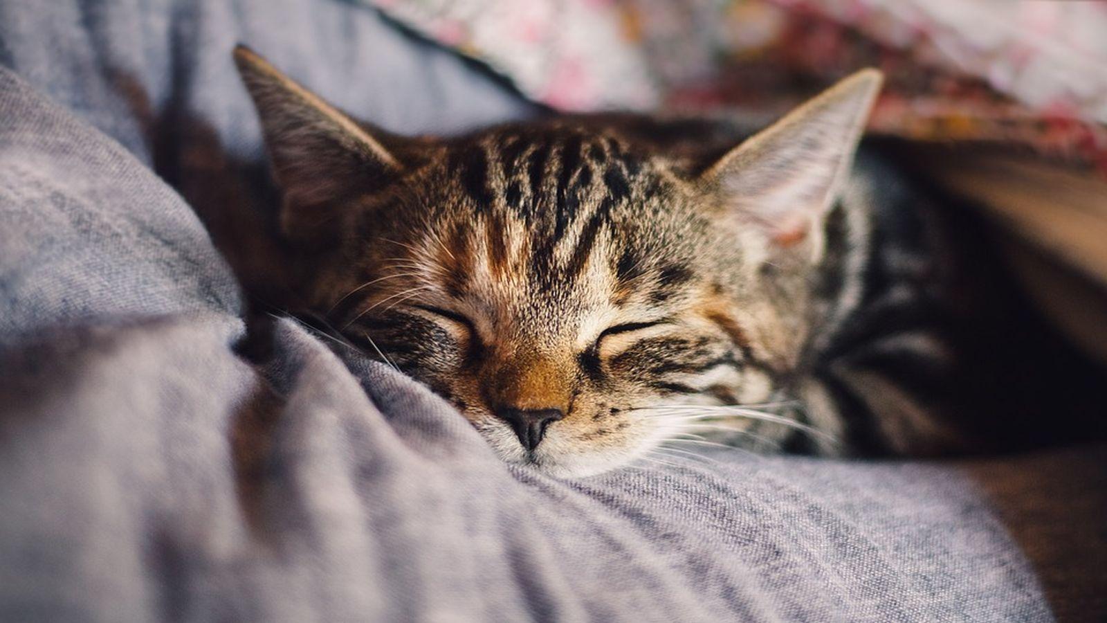 Így ismerjük fel a szeparációs szorongást a macskáknál