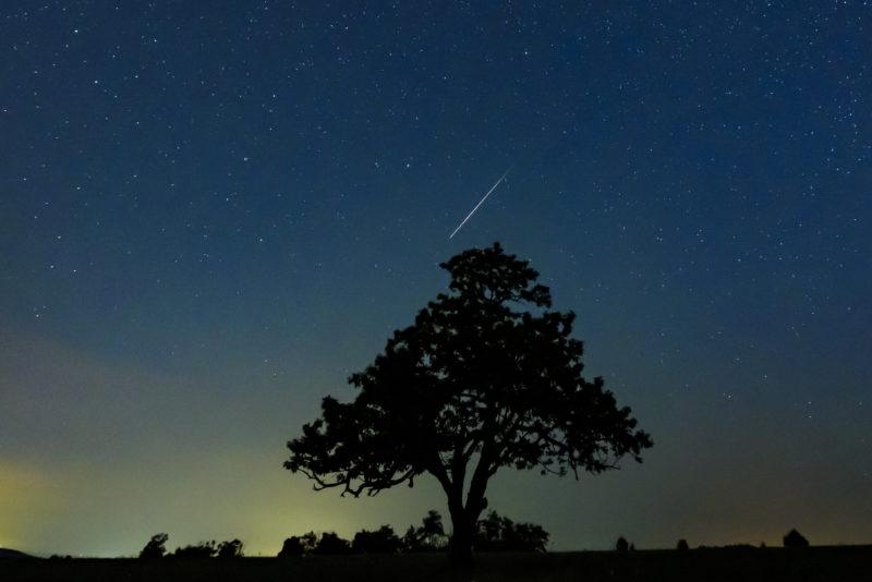 Salgótarján, 2019. augusztus 13. Meteor az égbolton egy fa felett Salgótarján közelében 2019. augusztus 13-ra virradóan. A Föld belépett a Perseida meteorraj összetevõit alkotó 109P/Swift-Tuttle üstökös pályája mentén szétszórt porfelhõbe. A Perseidák az egyik legismertebb, sûrû csillaghullást elõidézõ meteorraj. MTI/Komka Péter