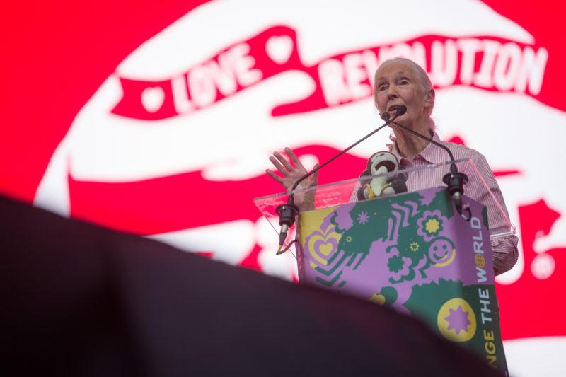 Budapest, 2019. augusztus 8. Jane Goodall brit etológus, antropológus, a Jane Goodall Intézet alapítója, az ENSZ békenagykövete elõadást tart a 27. Sziget fesztivál Nagyszínpadán  az óbudai Hajógyári-szigeten 2019. augusztus 8-án. MTI/Balogh Zoltán