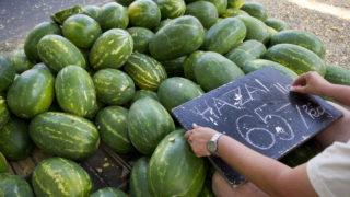 Orosháza, 2011. július 14. Egy zöldségkereskedõ a dinnyepiacot szabályozó rendeletmódosítás hatályba lépését követõen táblára írja a dinnye származási helyét és minõségi osztályát. A módosított jogszabályok célja, hogy erõsítsék a magyar dinnye piaci pozícióját, és a belföldi fogyasztók minél több és minél jobb minõségû dinnyét vásárolhassanak. MTI Fotó: Rosta Tibor