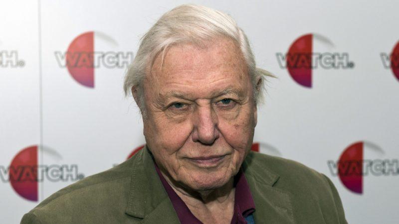 London, 2015. január 26. Sir David Attenborough brit természettudós és ismeretterjesztõ dokumentumfilmes az új, Natural Curiosities címû filmsorozatának bemutatása elkalmából tartott fotózáson a Londoni Állatkertben 2015. január 26-án. (MTI/EPA/Will Oliver)