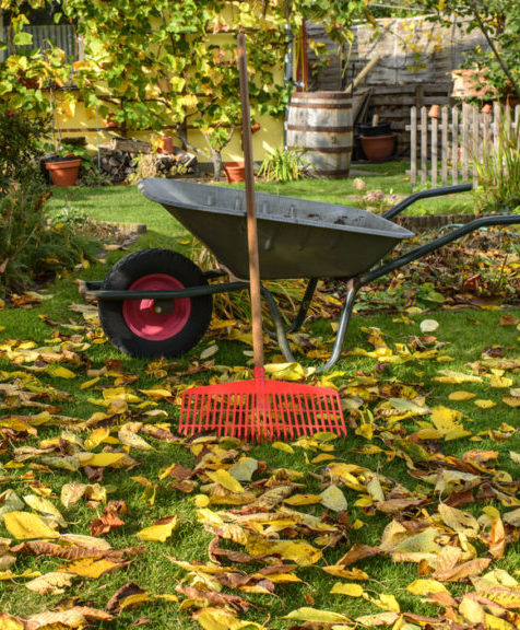 Autumn - Gardening