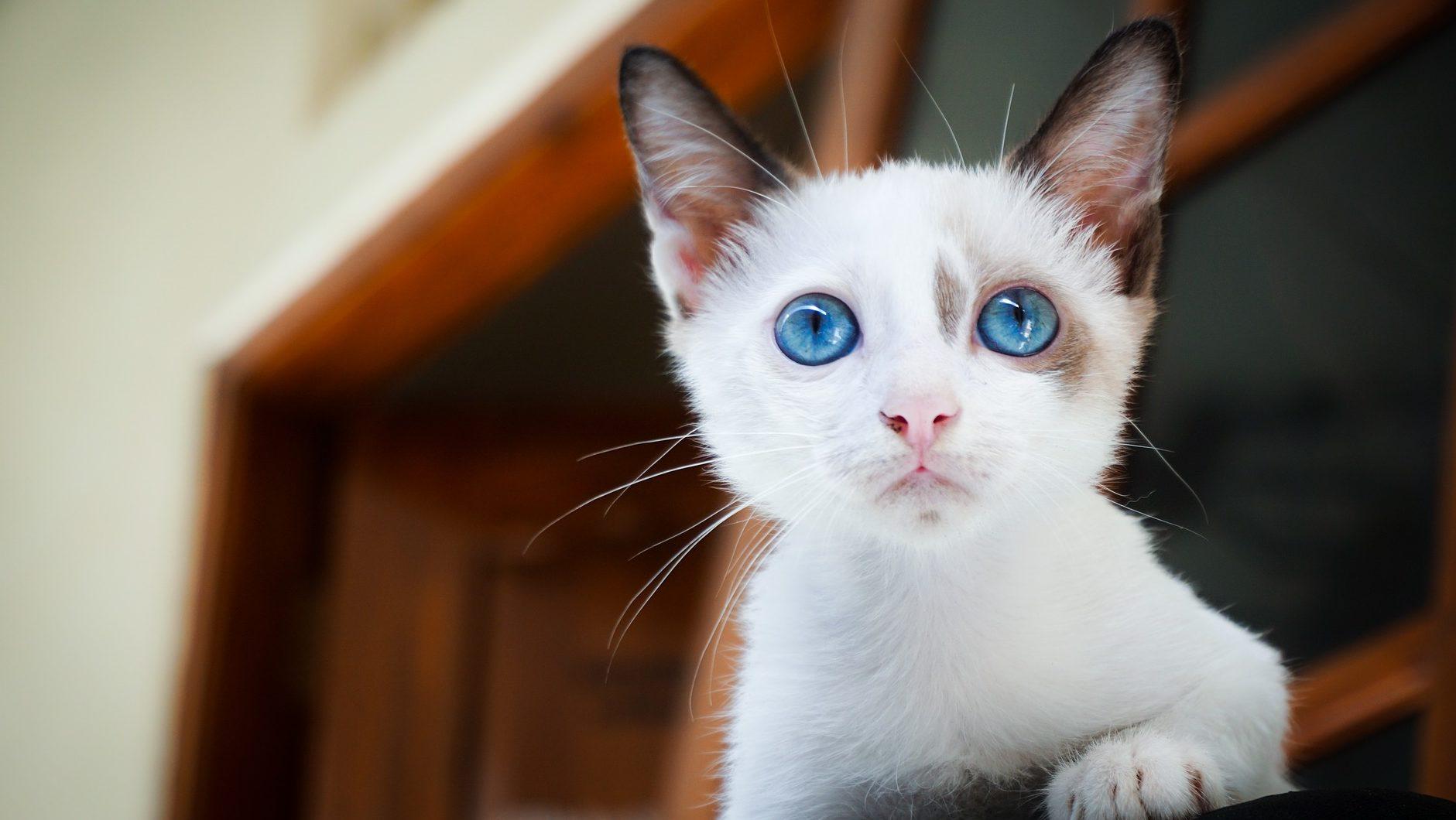 Nyávogni tudni kell, avagy a macskabeszéd rejtelmei