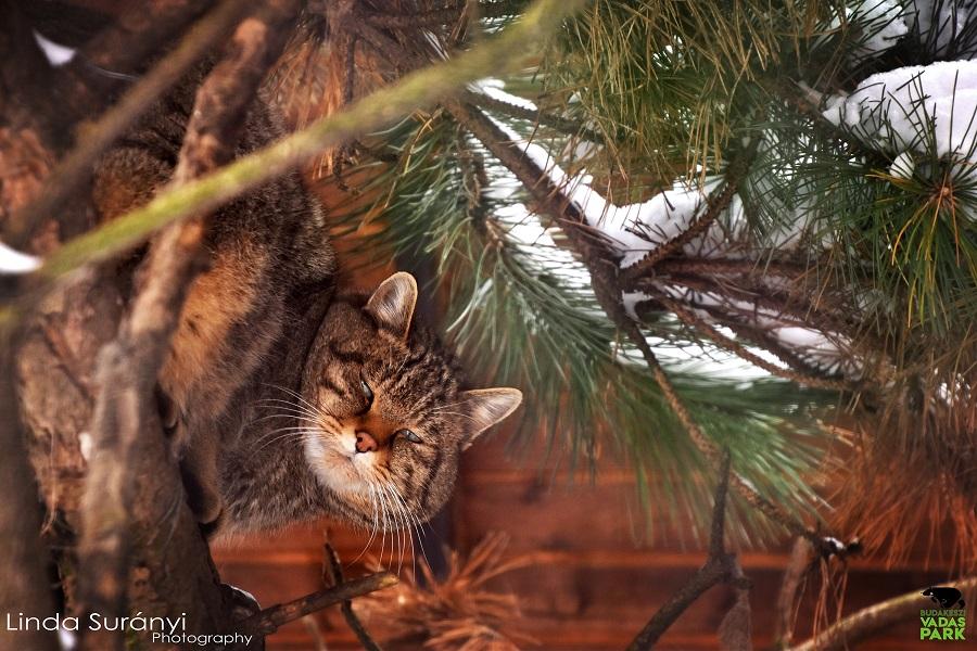 Szívhez szóló karácsonyi ajándékot kapnak a Budakeszi Vadaspark lakói