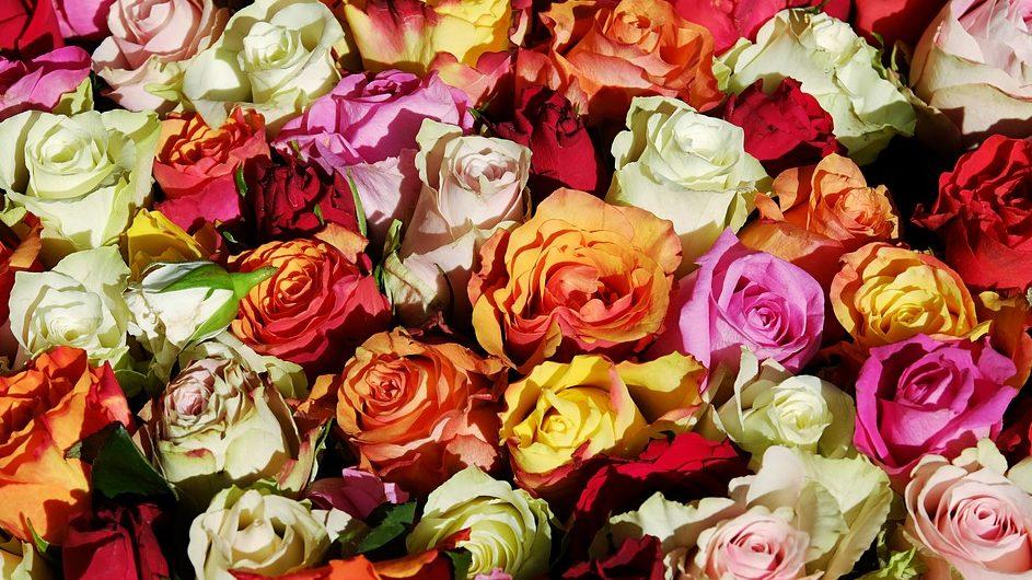Virág színek jelentése