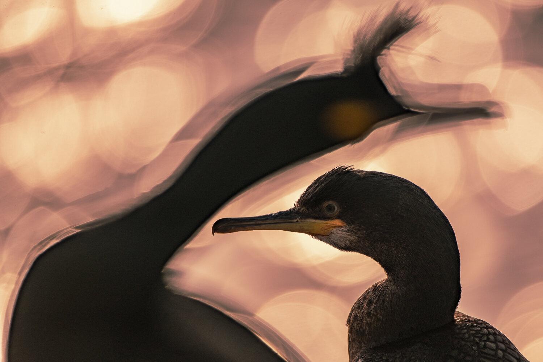 Idén is csodavilágba repítenek az év madárfotói