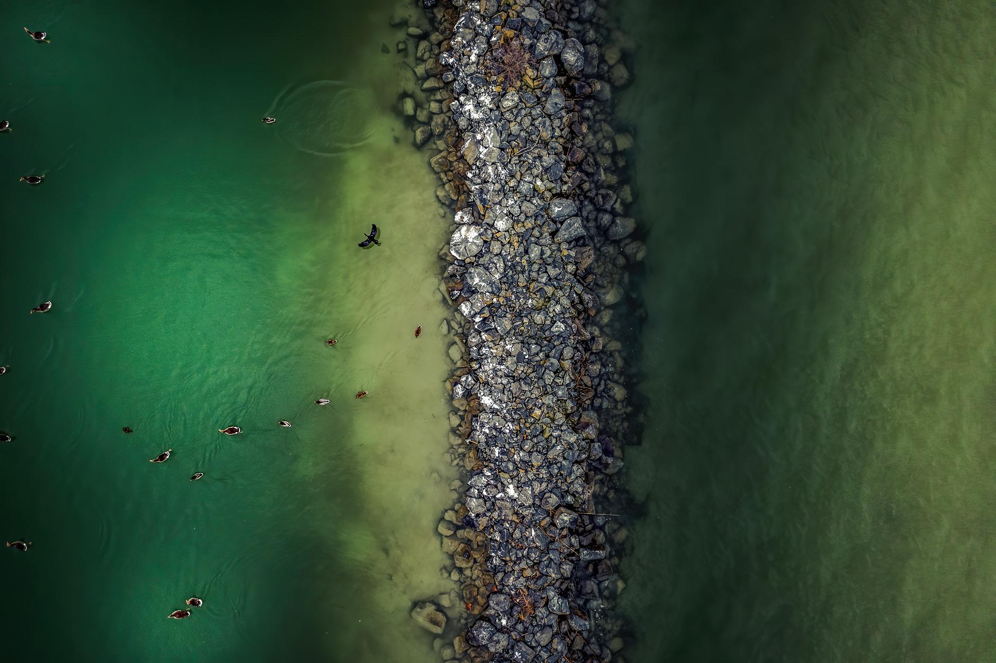 Így pusztítanak a Balatonnál a kárókatonák