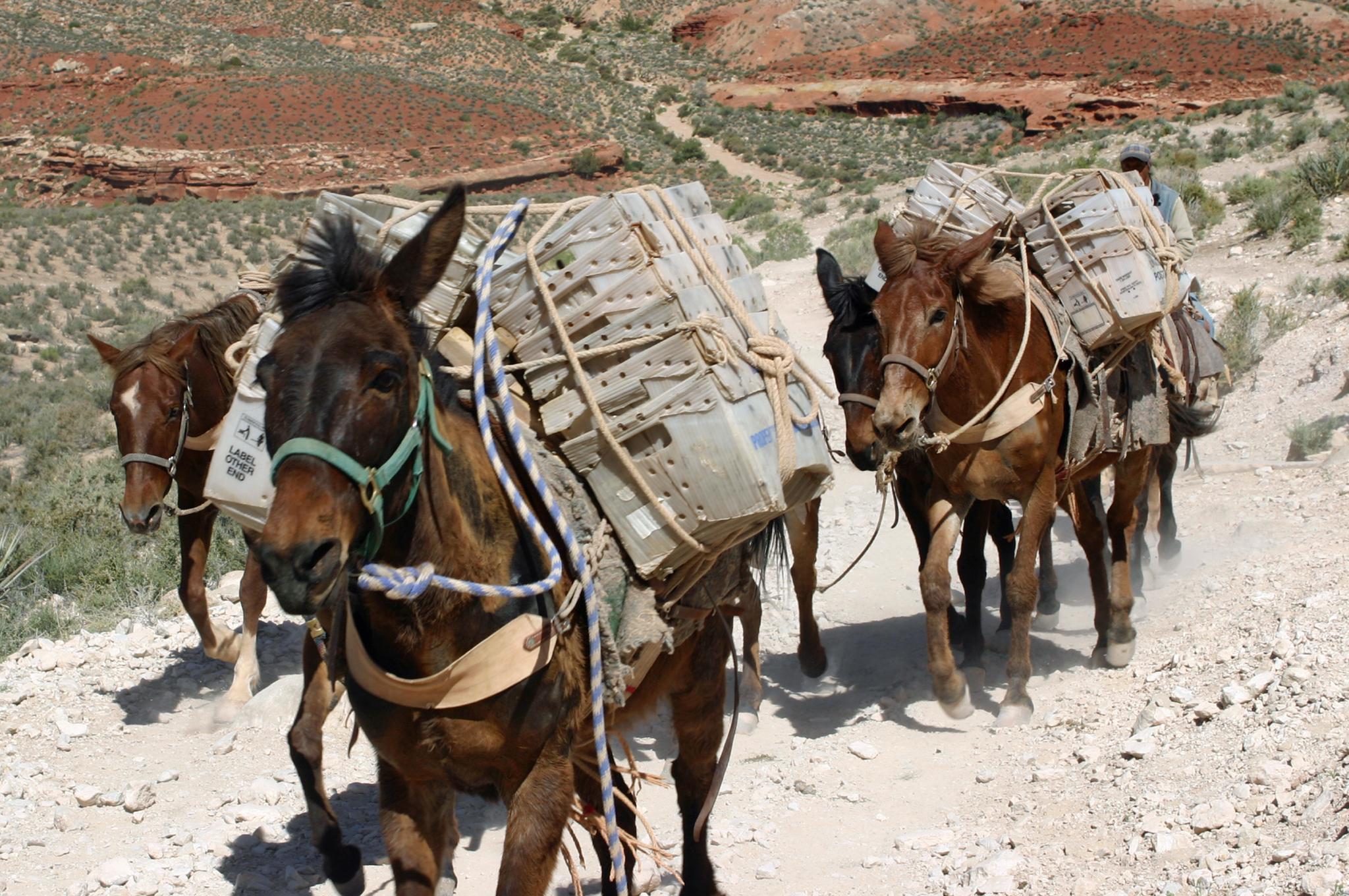 Az eldugott falu, ahova ma is öszvér viszi a postát