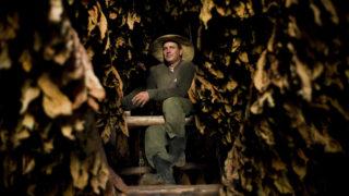 Pinar del Rio tartomány, 2018. március 6.A 2018. március 6-án közreadott kép Roberto Armas Valde kubai munkásról dohánylevelek közt a Martinez családi gazdaság szárítócsarnokában, a nyugat-kubai Pinar del Rio tartományban február 27-én. (MTI/AP/Ramon Espinosa)